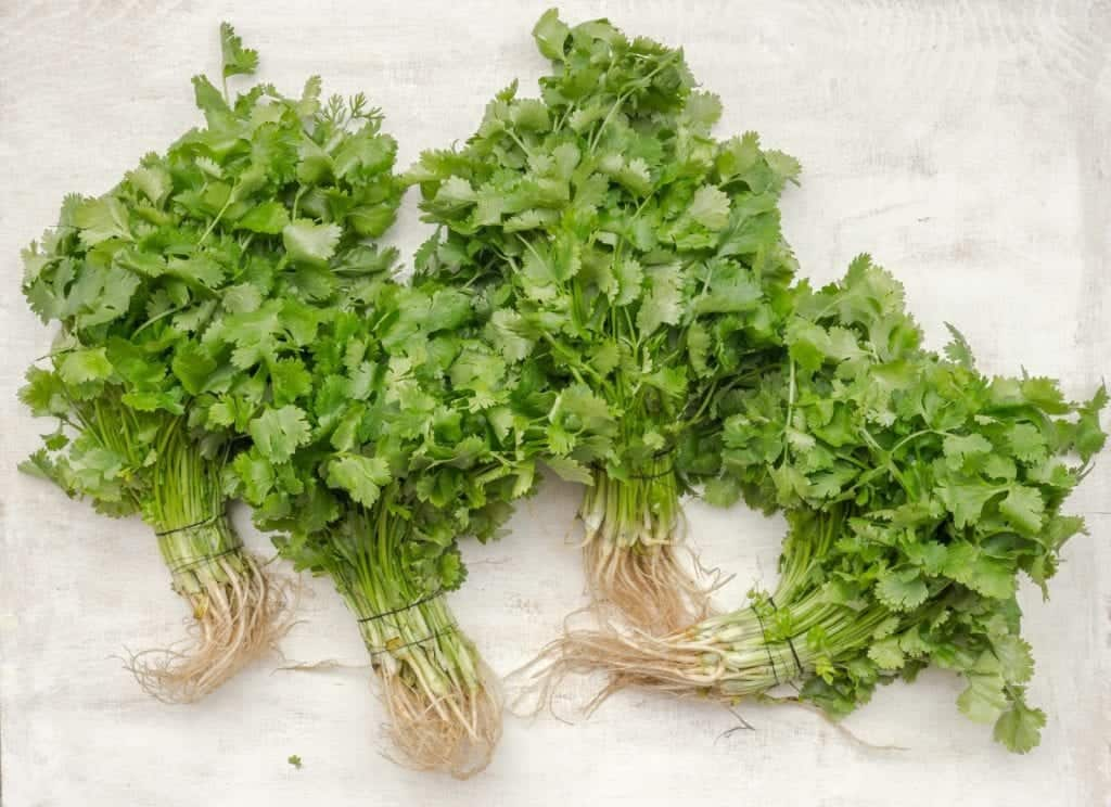 cilantro whole leaves