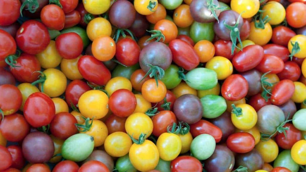 Tomato Mix Varieties