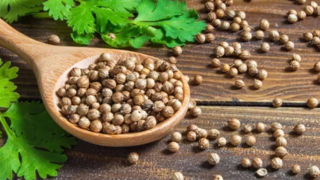 Coriander Seed Spice