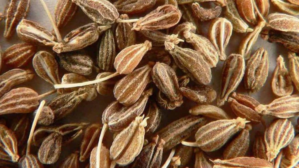 Anise Seed Spice