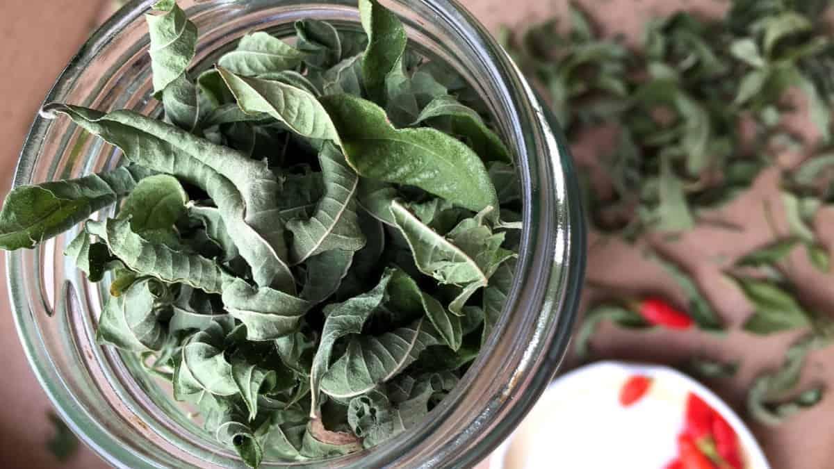 What is Lemon Verbena Herb?