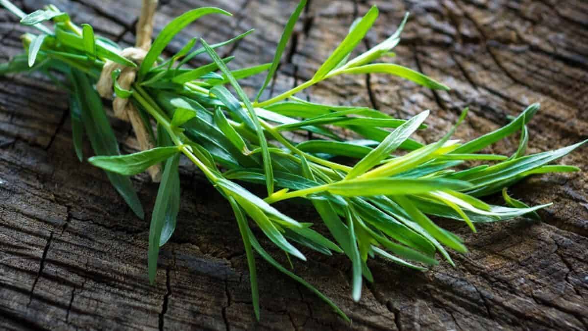 What is Tarragon Herb?