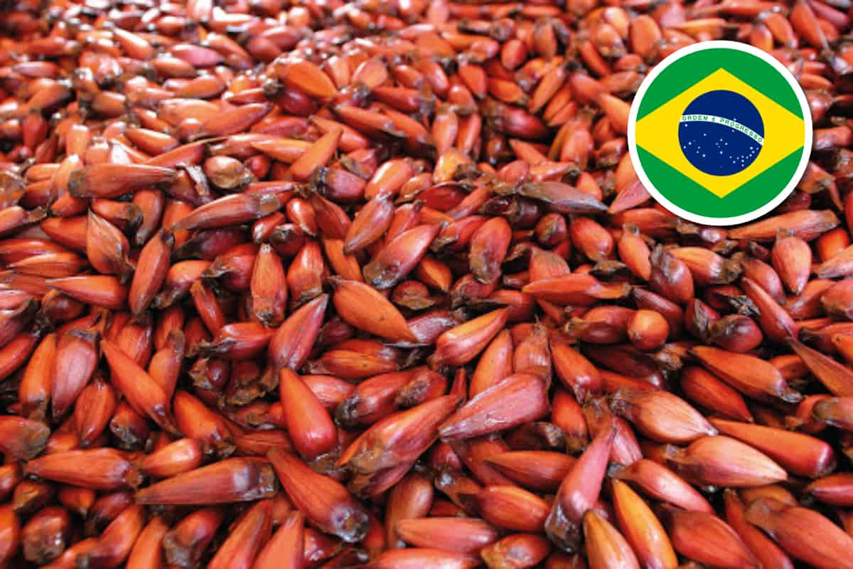 Brazilian Spices: The Ultimate List of 31 Traditional Seasonings